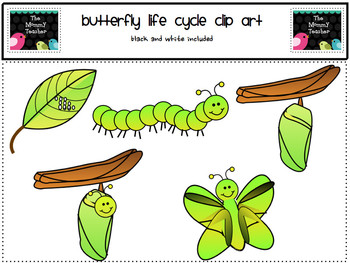 Clip Art: Butterfly Life Cycle ClipArt {Black and White Included}