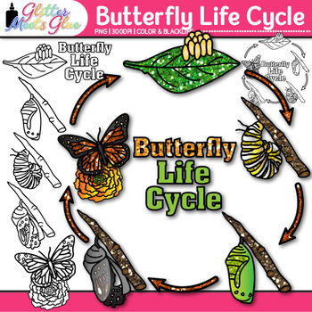 Butterfly Life Cycle Clip Art {Great for Animal Groups, Insect, & Bug Resources}