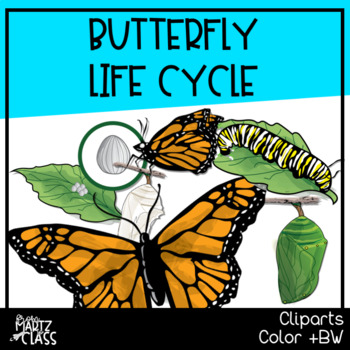 Butterfly Life Cycle (Cliparts)