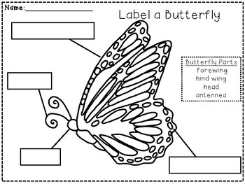 Close Reading ~ Butterfly ~ Nonfiction