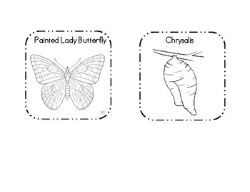 Painted Lady Butterfly Life Cycle Craft