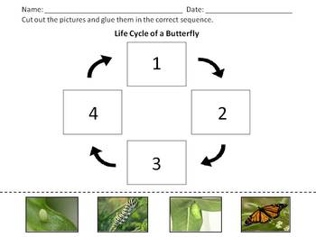 Butterfly Life Cycle - Cut and Glue Sequence Activity