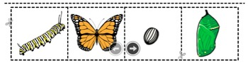 Life Cycle of Butterflies Cut and Paste Activity