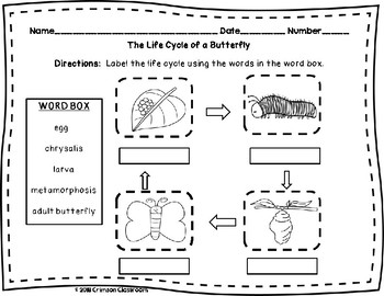 Butterfly Life Cycle Diagram and Worksheets