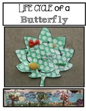 Butterfly Life Cycle Display
