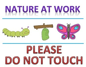 """Butterfly Life Cycle """"Do Not Touch"""" Sign"""