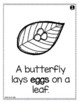 Butterfly Life Cycle Emergent Reader - Metamorphosis