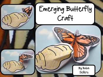 Butterfly Life Cycle {Emerging Butterfly Craft and Life Cycle Bulletin Board}