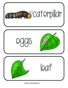 Butterfly Life Cycle (English)