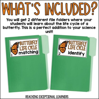Butterfly Life Cycle File Folder Activity