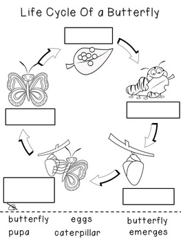 Butterfly Life Cycle File Folder Games and Worksheets