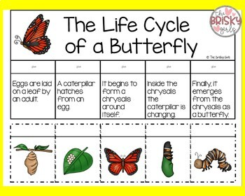 Butterfly Life Cycle Flip-Book