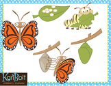 Butterfly Life Cycle Free Clip Art