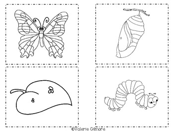 Butterfly Life Cycle Fun!
