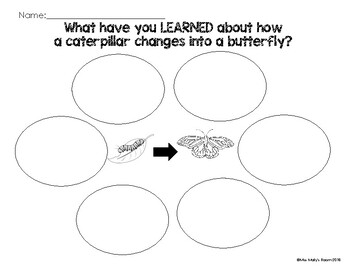 Butterfly Life Cycle Graphic Organizer