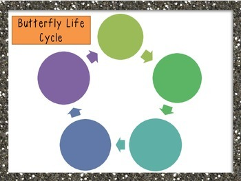 Differentiated Butterfly Life Cycle Interactive Activities