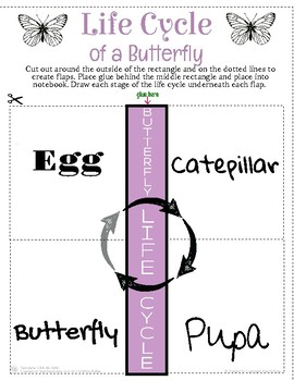 Butterfly Life Cycle Interactive Notebook.