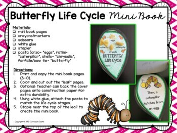 Butterfly Life Cycle Investigation