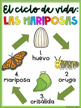 Butterfly Life Cycle Journal in Spanish