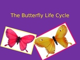 Butterfly Life Cycle Kindergarten1