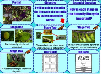 Butterfly Life Cycle Lesson Bundle