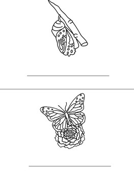 Butterfly Life Cycle Mini-Book