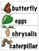 Butterfly Life Cycle Mini Reader Book, Vocab Cards, Activi