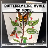 Butterfly Life Cycle Model - 3D Model - Distance Learning