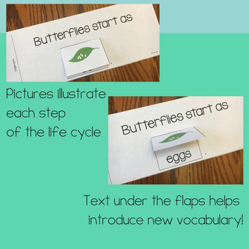 Butterfly Life Cycle Non-Fiction Flip Book Kit