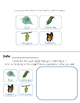 Butterfly Life Cycle Observation Book (InsectLore)