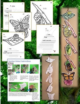 BUTTERFLY ON A STRING: BUTTERFLY LIFE CYCLE CREATE, FACTS, AND FILL INS