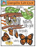 Butterfly Life Cycle {P4 Clips Trioriginals Digital Clip Art}