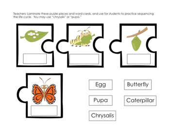 Butterfly Life Cycle Pack