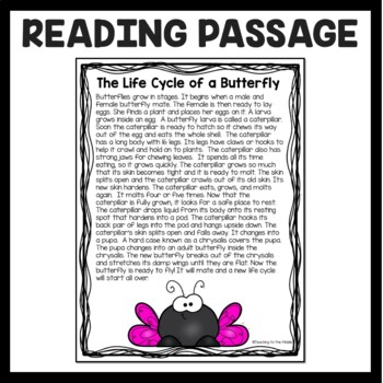 Butterfly Life Cycle Passage and Cut and Paste; Caterpillar; Chrysalis; Pupa