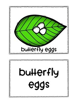 Butterfly Life Cycle Pocket Chart Pictures and Word Cards