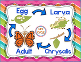Butterfly Life Cycle Poster {Free}
