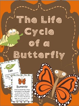 Butterfly Life Cycle Posters