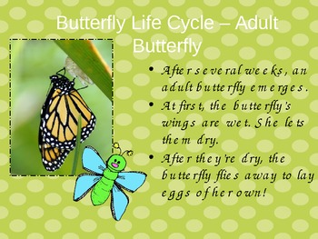 Butterfly Life Cycle PowerPoint