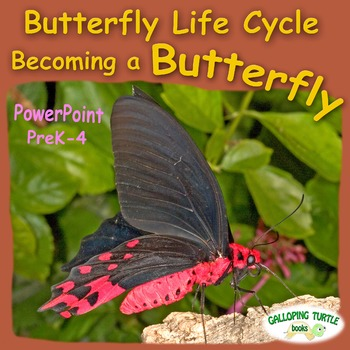 Butterfly Life Cycle PowerPoint - Becoming a Butterfly