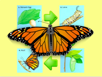 Butterfly Life Cycle Powerpoint and Game