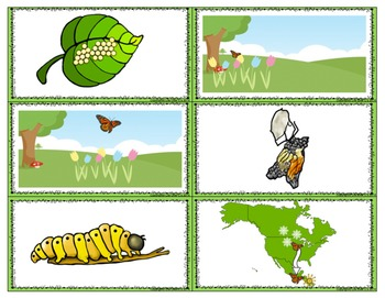 Butterfly Life-Cycle Preposition Match-Up