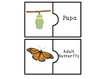 Butterfly Life Cycle Puzzles