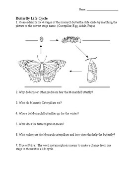 Butterfly Life Cycle Quiz