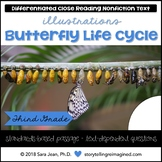 Butterfly Life Cycle Reading Passage | Differentiated Reading Comprehension