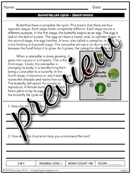 Butterfly Life Cycle Reading Passage   Differentiated Reading Comprehension