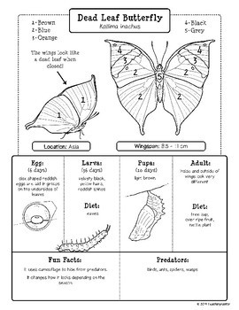 Butterfly Life Cycle Research: Fact Sheets