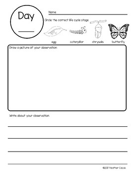 Butterfly Life Cycle Science Journal Observation Pages {PK -1} FREE