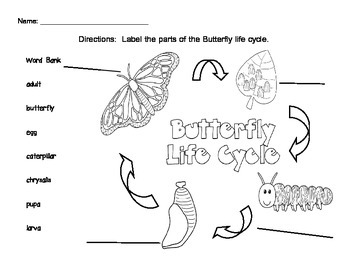 Butterfly Life Cycle Science Writing Activity