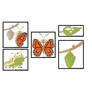Butterfly Life Cycle: Sequencing, Coding, and Cut & Paste