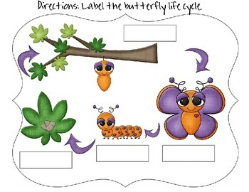 Butterfly Life Cycle - set